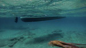 Octopus snorkeling boat trip
