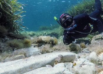 Octopus snorkeling in Sicily